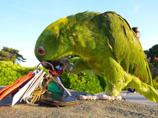 papoušek s klíčema