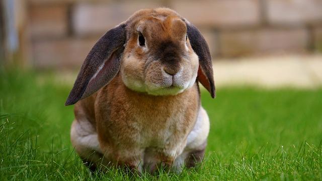 králíček v trávě
